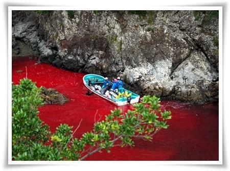 日本一母海豚仅为这原因痛杀幼子,母爱真伟大