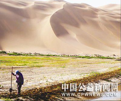 新疆吐鲁番:沙漠里,稻田泛青了
