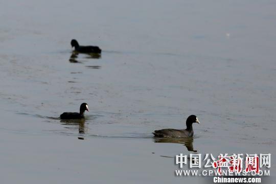 湖北宜昌统筹系统推进水环境治理 呵护长江水资源