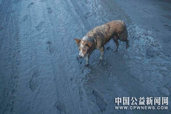 菲律宾火山爆发居民急逃!许多动物被留下 需要紧急救援