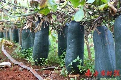 海南社会组织协助销售农产品21415吨