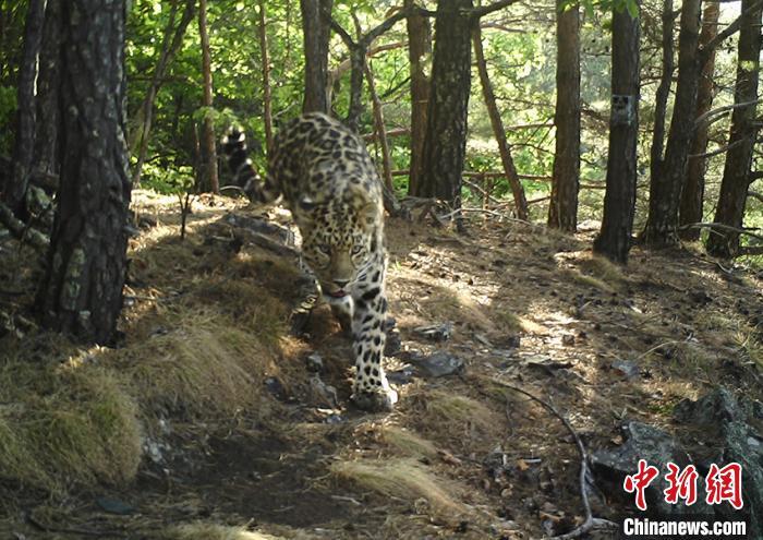 """东北虎豹国家公园""""两项试点""""具备验收条件"""